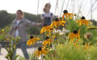 Giới khoa học nghi ngờ phấn hoa là nguồn cơn gia tăng tốc độ lây lan SARS-CoV-2