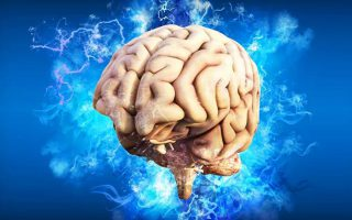 'Tế bào thời gian' được phát hiện trong não người