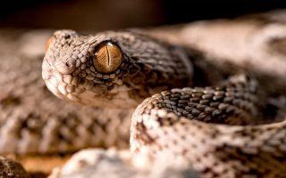 10 loài rắn nguy hiểm nhất thế giới