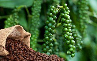 Giá cà phê Arabica, hồ tiêu tiếp đà tăng