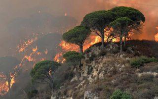 Hiệu ứng Domino: Gần một phần ba số cây trên thế giới có nguy cơ tuyệt chủng