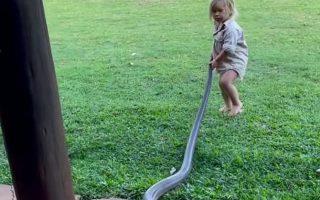 Video khoảnh khắc cậu bé hai tuổi nắm đuôi con rắn khổng lồ không chút hoảng sợ